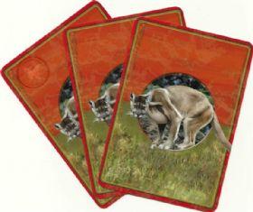 Animal Spirit Guide Reading